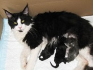 Pika's first litter, Beba, Beckam and Boby.