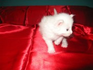 Pika's second litter, Eros