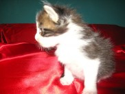 Pika's second litter, Edi