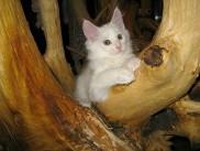 Pika's second litter, Edward 1