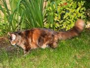 Ida's third litter, Flora.
