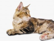 Ida is a gorgeous, sweet, very affectionate cat.
