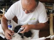 Čiščenje zob s krtačko
